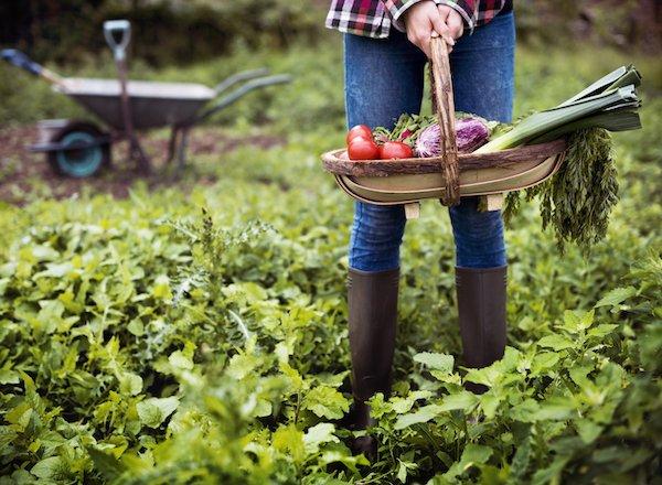 conseils premier jardin potager